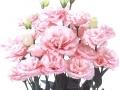 claris-pink-jpg