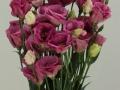 excalibur-rose-pink-2-jpg