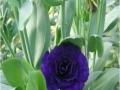 fours-fours-violet-jpg