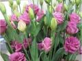 foursfours-rose-jpg