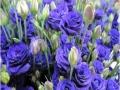foursfours-violet-jpg
