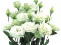 robella-green-jpg