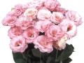 robella-light-pink-jpg