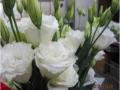 robella-white-jpg