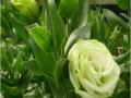 rosina-green-jpg
