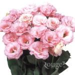 Robella-Light-Pink