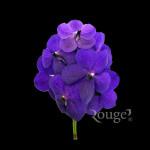 Purple-GA